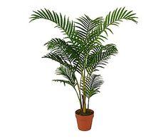 chrysalidocarpus lutescens planta areca nordic pinterest ikea plantas y sillas. Black Bedroom Furniture Sets. Home Design Ideas