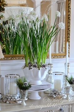 Forcing bulbs for Christmas Holidays adds a festive touch to your decorating. Add decorative pine cones to your potted paperwhites. Christmas Flowers, Noel Christmas, All Things Christmas, Winter Christmas, Christmas Crafts, Christmas Decorations, Xmas, Christmas Ideas, Elegant Christmas