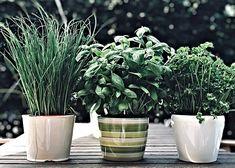 Bylinky, nepostradatelná součást kuchyně! | ReceptyOnLine.cz - kuchařka, recepty a inspirace Plants, Plant, Planets