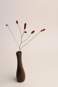 ワレモコウ バイカラー http://hanaya87.com/library/flower/flmt552