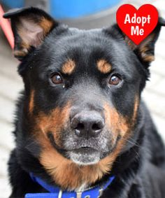Rescue Dog of the Month Rescue dogs, Dogs, Dog lovers