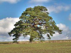 SVĚT PODLE PROTHA (4.): Zabij bobra, zachráníš strom, zabij aktivistu, zachráníš les | iREPORT – music&style magazine
