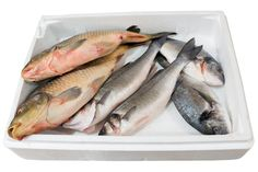 Mercury from Fish Increases Risk for Lou Gehrig's disease