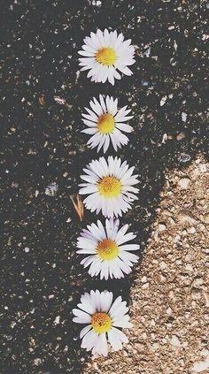 Girassol tumblr –