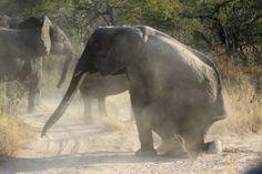 Favorite Travel Photos (Part 2): Elephant Plains safari, South Africa