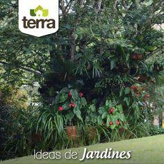 Un #árbol es ideal para que lo rodees de hermosas #flores y plantas en sus ramas y en su base y permitas que todo un ecosistema tome vida, una simbiosis extraordinaria que atrae aves, mariposas e insectos beneficiosos.