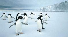 More penguins.