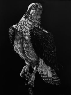 """Raptor Surveillance"" Scratchboard Art, Zimmerman, Bald Eagle, Lion Sculpture, Wildlife, Statue, Artist, Animals, Animales"
