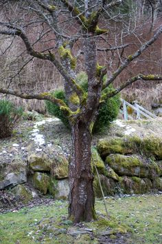 Trunks, Plants, Drift Wood, Flora, Plant