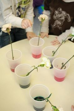 Carnation color change science activity