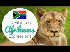 Afrikaans is one one of the easiest languages to learn and make you laugh. Translating Afrikaans to English, these Afrikaans idioms will make you giggle.