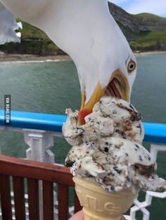 He tried to take a photo of the ice cream. Greedy bastard Seagull photobombed it!