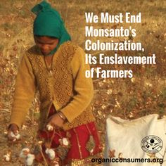 Check out this article by Dr. Vandana Shiva to learn why stopping Monsanto's control of farmers in India is a matter of life and death. #MonsantoMakesUsSick #India #GMO