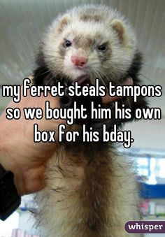 my ferret steals tampons so we bought him his own box for his bday.