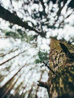 Urban Landscape Photography Tips – PhotoTakes Tumblr Photography, Creative Photography, Amazing Photography, Landscape Photography, Portrait Photography, Nature Photography, Travel Photography, Digital Photography, Photography Lighting