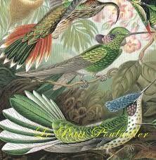 https://www.google.co.uk/search?q=Ernst Haeckel