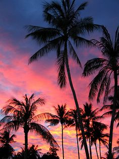 Beach Sunset Palm Tree Tumblr
