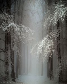 Perfect scenery for The House of Thoth Snow Forest, Hungary Snow Scenes, Winter Scenes, Beautiful World, Beautiful Places, Foto Picture, Picture Movie, Snow Forest, Foggy Forest, Misty Forest