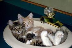 Relaxing in the sink.                                                                                                                                                                                 More.:)Did.G