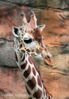 giraffe.  How can this NOT be loved? =)
