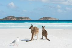 Australia's whitest sand beach - Lucky Bay in Cape Le Grand National Park, Western Australia