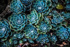 Blue Succulents, Planting Succulents, Succulent Plants, Garden Design Plans, Garden Landscape Design, Pattern Pictures, Pattern Images, Original Wallpaper, Wallpaper S
