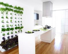 an indoor herb garden wall. -- Finally a living wall that would work in the desert! Herb Garden In Kitchen, Kitchen Herbs, Home And Garden, Herbs Garden, Green Kitchen, Inside Garden, Nice Kitchen, Garden Types, Garden Living
