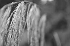 Tall grass, one of the final NZ photos that I missed last time.