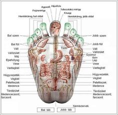 Acupressure points in feet by morecerv. Massage Therapy, Reiki, Chakra Meditation, Kundalini Yoga, Sanskrit Names, Mudras, Medical Anatomy, Foot Reflexology, Massage