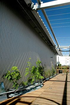 Melbourne City Council Chambers - Vertical Garden