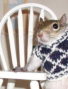 President of the Student Council Sugar Bush Squirrel