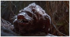 Phobia Central on TOGT11: Zemmiphobia is the fear of the great mole rat.  Pictured: An ROUS from Princess Bride (Rodent of Unusual Size)