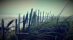A Grassy Fence at Doonbeg. | Flickr - Photo Sharing!