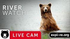River Watch - Katmai National Park, Alaska powered by EXPLORE.org