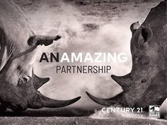 On this very important Endangered species day – we are proud to be apart of something great! A Worldwide Leader In Real Estate in partnership with Save the Rhino International.  Buy | Sell | Rent www.century21.co.za www.savetherhino.org/ #C21 #Leaders #buy #sell #rent #ENERGACITY #support #worldwideleader #givingback Save The Rhino, Endangered Species, Property For Sale, Africa, Real Estate, Real Estates