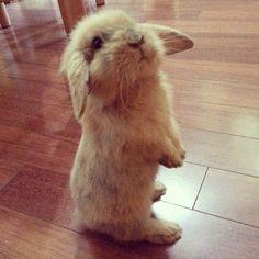 irresistible bunny rabbit dogvacay