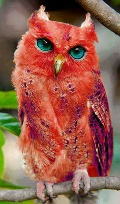 The Madagascar Red Owl is a bird that lives only on the island of Madagascar