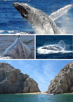 Whale Watching in Los Cabos, January-March. 1 of  the Top 5 Reasons to Visit Cabo!