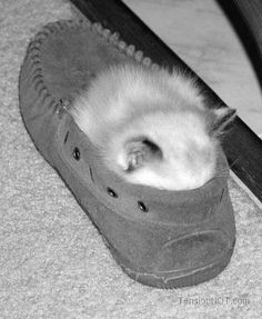 Cute kitten sleeping in shoes