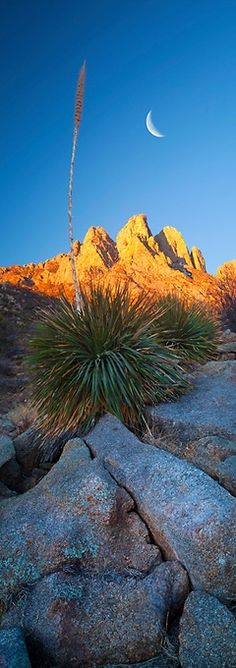"""Crescent Dawn"" - Organ Mountains, New Mexico by Jeffrey Murray Photography."