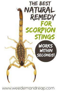 Natural Remedy for Scorpion Stings! - Frankincense - also good for inflammation