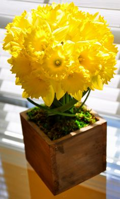 Dining With Daffodils..A Wonderful Touch of Spring!