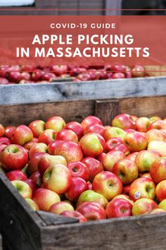 Where to eat and pick your own apples in Massachusetts Apple Picking Season, Pick Your Own Apples, Apple Festival, New England Fall, Apple Cider Donuts, Outdoor Art, Autumn Theme, Wedding Humor, The Fresh