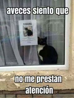 meme gato                                                                                                                                                      Más