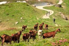 So Pass'Portes. Franco Suisse, French Alps, Mtb, Mountain Biking, Bike, Animals, Trek Mtb, Puertas, Sun