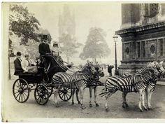 Редчайшие исторические снимки, которые вы вряд ли могли видеть раньше