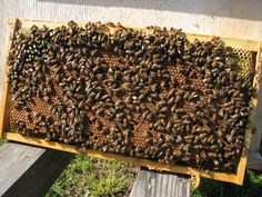 Reasons for Hive Inspections - Keeping Backyard Bees