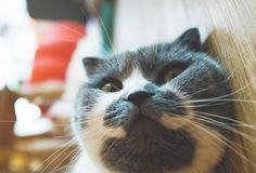 Chicago Is Getting Its First Cat Cafe. For Real.