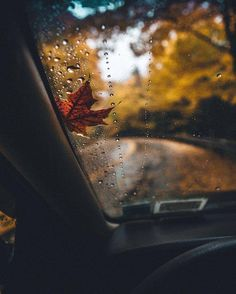 Осень | Блогер Jill_Morris на сайте SPLETNIK.RU 19 сентября 2017 | СПЛЕТНИК