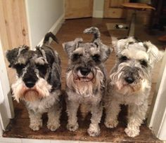 Edward, Arthur & Frankie